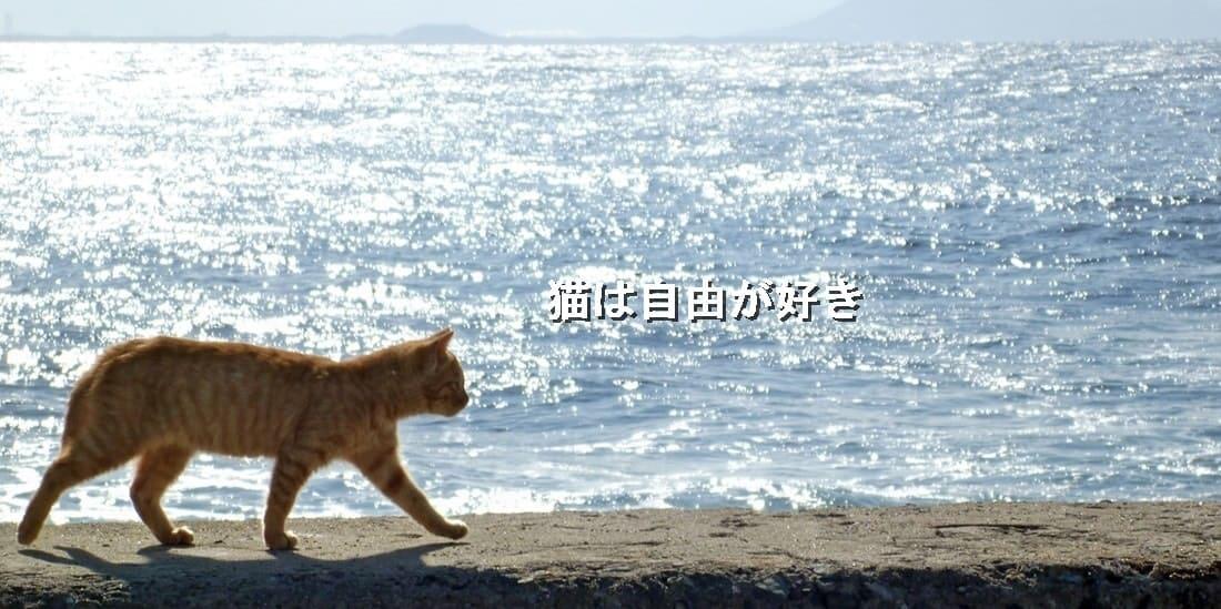 3匹の猫とのてんやわんや生活